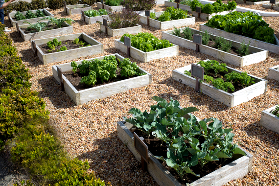 Low Maintenance Herb Garden