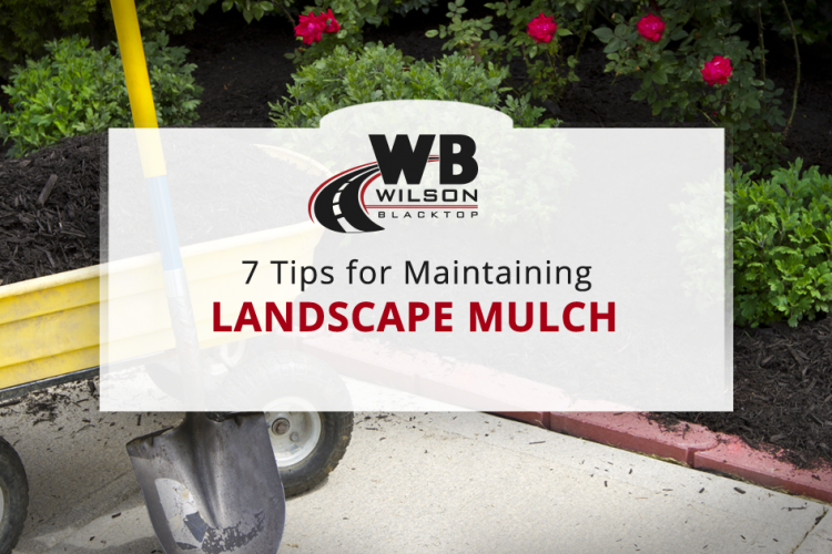 7 Tips for Maintaining Landscape Mulch