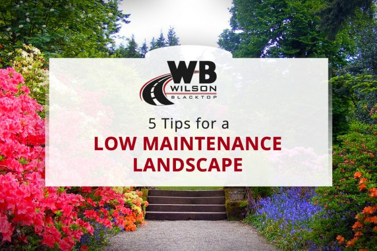 5 Tips for a Low Maintenance Landscape