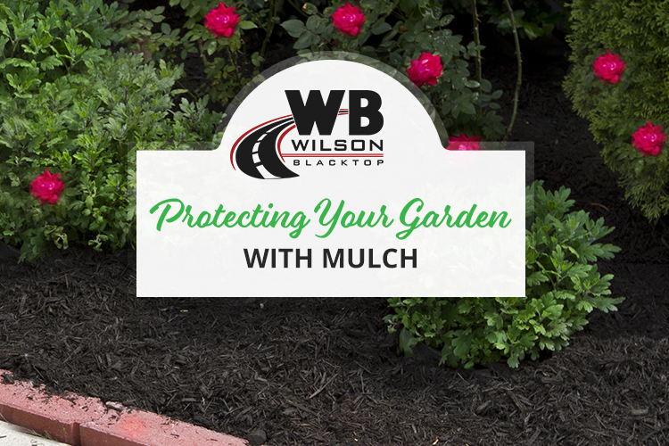How to Protect Your Garden with Mulch
