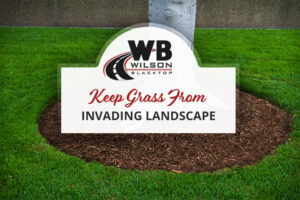Keep grass out of landscape