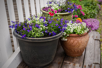 3 Containers with flowers