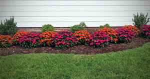 Orange and pink flowers in landscaping