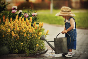 Little boy watering flowers with watering can
