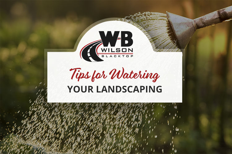 Tips for Watering Landscaping