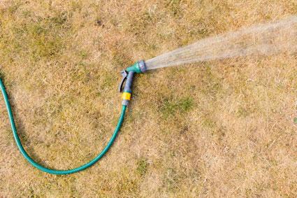 Garden hose spraying water on brown grass
