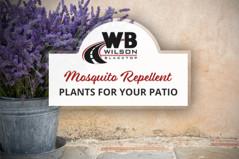 Mosquito Repellent Plants for Your Patio